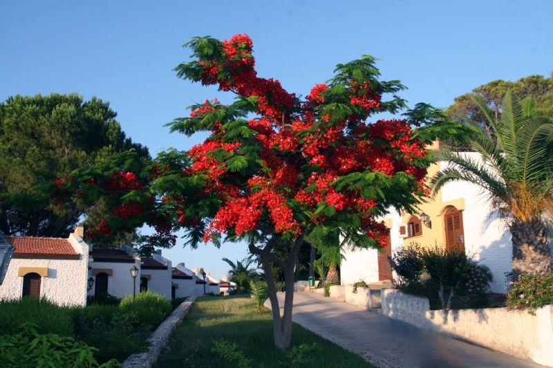 acapulco_25225998539346438052